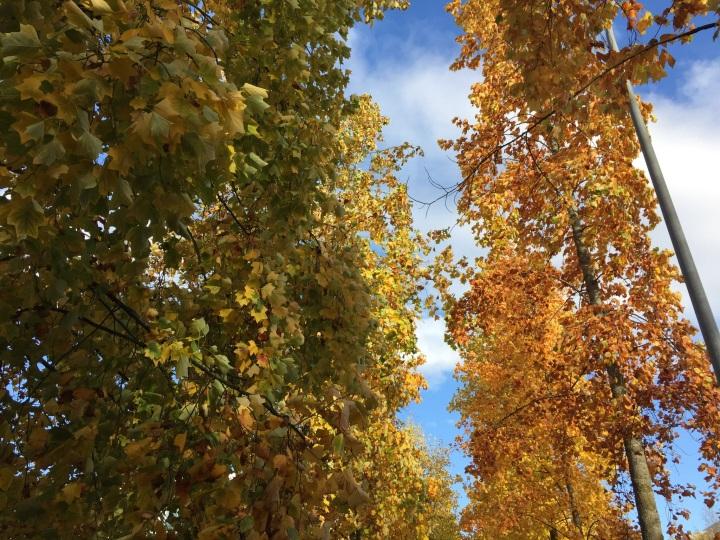 Winter Trees – October2016